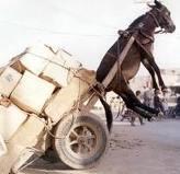 burro de carga
